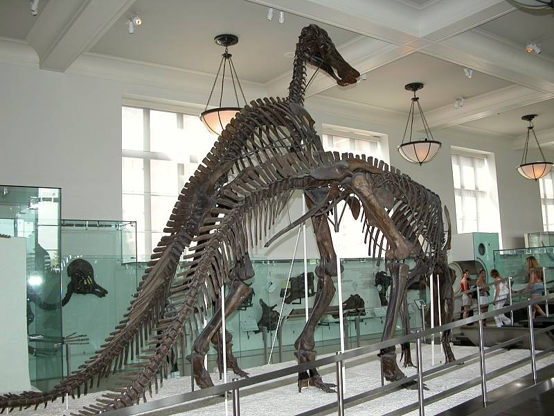 Dinosaur skeltons at Museum of Natural History