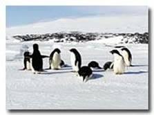 Bob Marstall's Antartica Slide Show Penguins